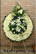 绿掌2枝、白香水百合6朵/悼念