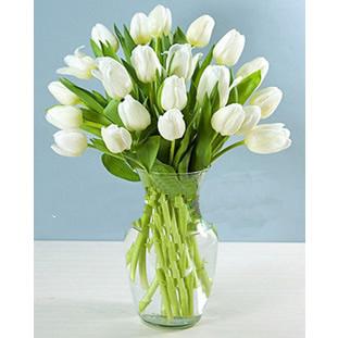 19枝白色郁金香高贵的心