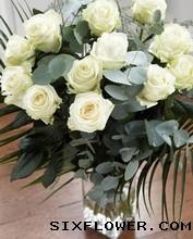 快乐无限/12枝白玫瑰