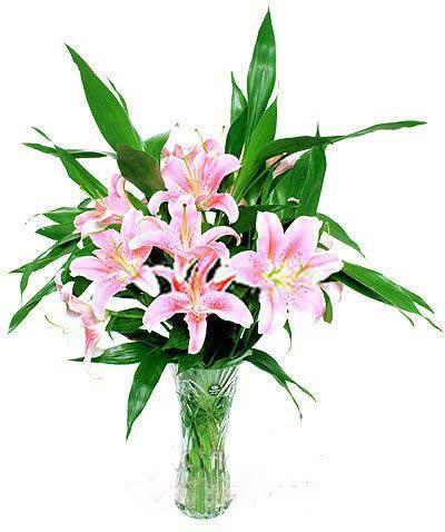 你的快乐健康是我最多的期盼/60枝玫瑰:百合6枝谢谢你的爱/瓶插花