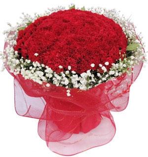 99枝红色康乃馨/母亲节快乐
