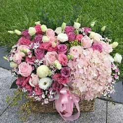 爱的光辉/33枝香槟玫瑰
