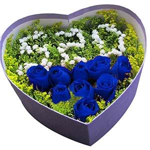 我愿意一生守在你的身边/9枝蓝玫瑰礼盒