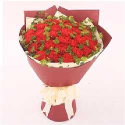 36枝红色康乃馨/牵挂