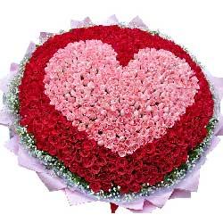 美丽永远属于你/520枝玫瑰