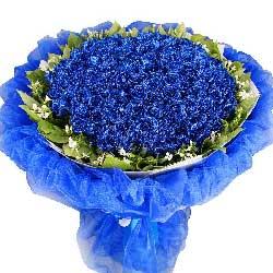 99枝蓝色妖姬/装上翅膀我要飞向你,爱的印迹如此坚定…