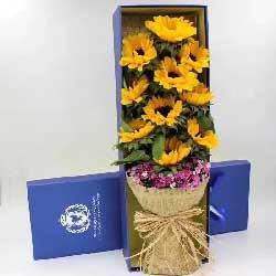 19枝康乃馨/献给母亲的爱:10枝向日葵/簇簇的红花,那是我无限的祝愿