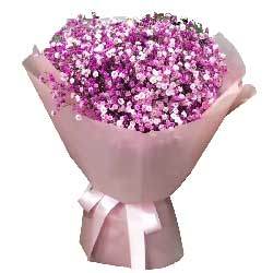 永远在一起/粉色满天星1大扎:幸福永远/粉色、白色满天星混搭一大扎