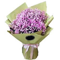 你的魅影在我心中/66枝紫玫瑰:粉白满天星混合搭