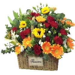 祝你美满幸福/向日葵5枝,红色玫瑰10枝、红色康乃馨19枝