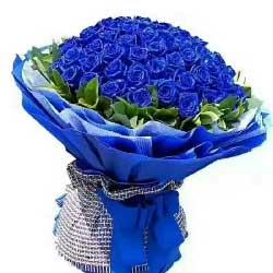 爱情挑战/99枝蓝色玫瑰