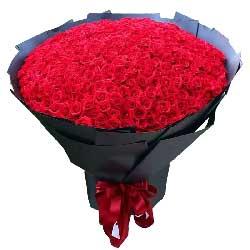 美好时光/365枝红色玫瑰