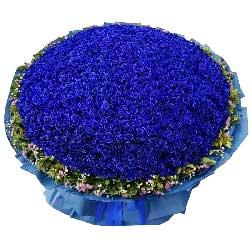 为你付出所有/520枝蓝玫瑰