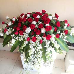 40枝红色玫瑰/演讲台花4