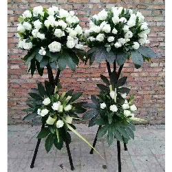 四季发财/48枝白色玫瑰花
