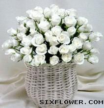 52支白玫瑰/永远的朋友
