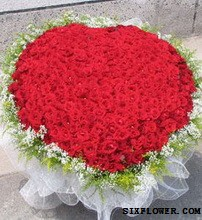 想你的365天/365支红玫瑰