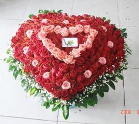 99支玫瑰/从心出发