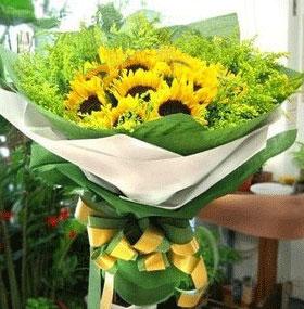 9支向日葵/炙热的爱