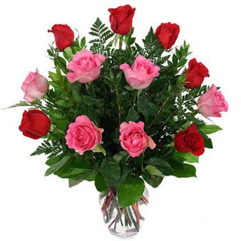 爱不是怀念/12支玫瑰