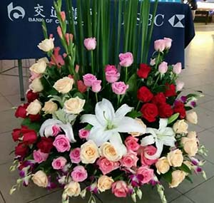 为幸福喝彩/66支玫瑰