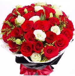 33枝红色玫瑰/征服