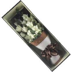 爱你是最美的蜜儿/16枝白色玫瑰