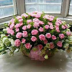 一生快乐/66支粉色康乃馨