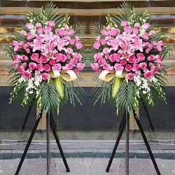 源远流长有道财/48枝粉色玫瑰