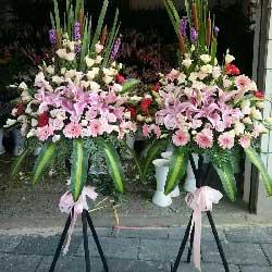 顺顺利利/30枝香槟玫瑰,8枝红色非洲菊