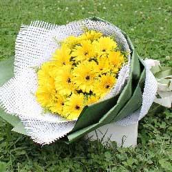 16朵黄色扶郎花,有福气