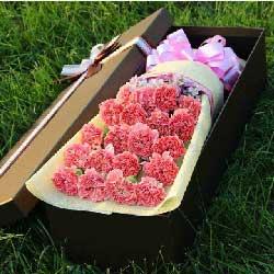 20朵粉色康乃馨,礼盒装,放飞梦想