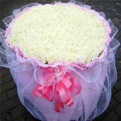520朵白玫瑰,最亮的光芒