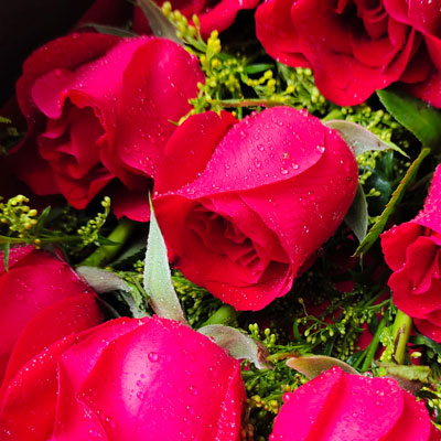 19朵红色康乃馨,2支多头粉色百合,纯洁无私的爱