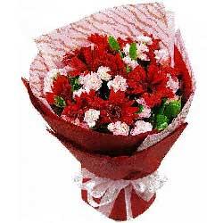 9朵红色扶郎花,淡定安逸
