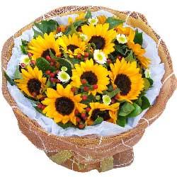 11朵向日葵,父爱如山