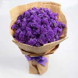 紫色勿忘我,想你而堆积的愁