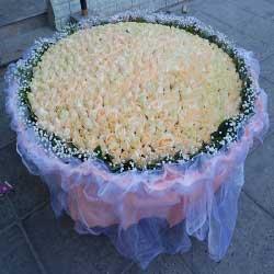 999朵香槟玫瑰,拥有你的爱我很开心