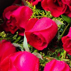 33朵红玫瑰,圆形花桶装,无私的爱
