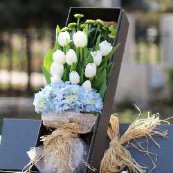 11朵白色郁金香,礼盒装,无限的祝福