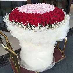 999朵玫瑰,只爱你一个