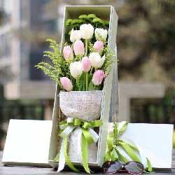 11朵郁金香,伴着春风送去问候