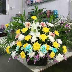 22朵菊花,告慰他在天之灵
