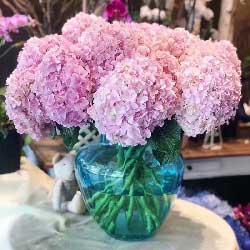 悠扬的爱/10只粉色绣球花