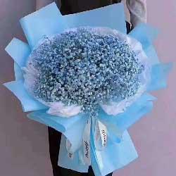 甜甜地爱着你/蓝色满天星一扎