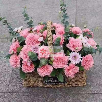 精彩每一天/33枝粉色康乃馨
