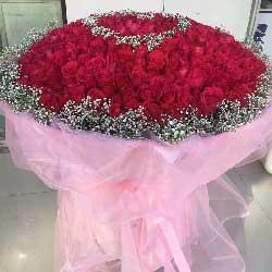 一辈子的爱/520枝玫瑰