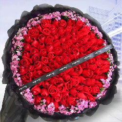 99枝红色玫瑰花/爱你的情无法改变