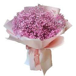 最美/一扎粉色满天星