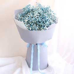 爱的憧憬/蓝色满天星